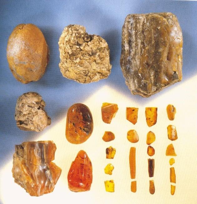 twee manieren van het dateren van fossielen